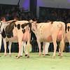 SwissExpo2017_Holstein_L32A1034