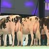 SwissExpo2017_Holstein_L32A1096