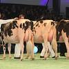 SwissExpo2017_Holstein_L32A1093