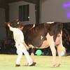 SwissExpo2017_Holstein_IMG_9634
