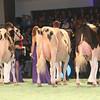 SwissExpo2017_Holstein_IMG_9576