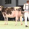 SwissExpo2017_Holstein_IMG_9637