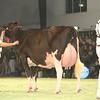 SwissExpo2017_Holstein_KIMG_0058