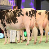 SwissExpo2017_Holstein_IMG_9564