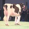 SwissExpo2017_Holstein_IMG_9501