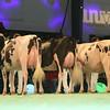 SwissExpo2017_Holstein_L32A1147