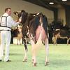 SwissExpo2017_Holstein_L32A0870
