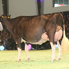 SwissExpo2017_Holstein_KIMG_0028