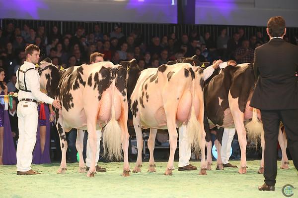 SwissExpo2017_Holstein_IMG_9574