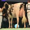 SwissExpo2017_Holstein_L32A1144