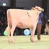 SwissExpo2017_Holstein_IMG_9503