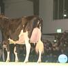 SwissExpo2017_Holstein_IMG_9770