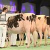 SwissExpo2017_Holstein_IMG_9567