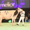 SwissExpo2017_Holstein_IMG_9653