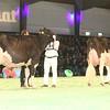 SwissExpo2017_Holstein_IMG_9749