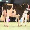 SwissExpo2017_Holstein_IMG_9891