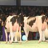 SwissExpo2017_Holstein_IMG_9776