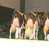 SwissExpo2017_Holstein_IMG_9717