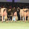 SwissExpo2017_Holstein_L32A1150