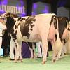 SwissExpo2017_Holstein_IMG_9646