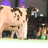 SwissExpo2017_Holstein_IMG_9611