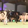 SwissExpo2017_Holstein_IMG_9609