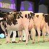 SwissExpo2017_Holstein_IMG_9565