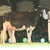 SwissExpo2017_Holstein_L32A1233