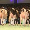 SwissExpo2017_Holstein_IMG_9578