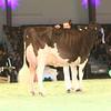 SwissExpo2017_Holstein_IMG_9741
