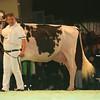 SwissExpo2017_Holstein_L32A1156