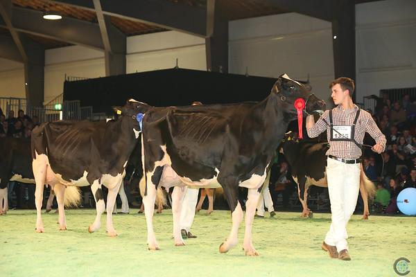 SwissExpo2017_Holstein_L32A1223