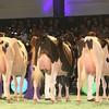 SwissExpo2017_Holstein_IMG_9581
