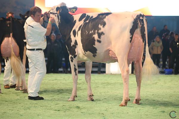 SwissExpo2017_Holstein_L32A1136
