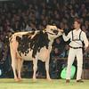 SwissExpo2017_Holstein_L32A1067