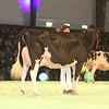 SwissExpo2017_Holstein_IMG_9738