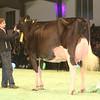 SwissExpo2017_Holstein_IMG_9754