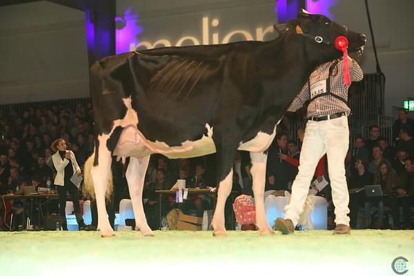 SwissExpo2017_Holstein_L32A1234