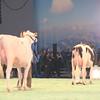 SwissExpo2017_Holstein_IMG_9513