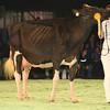 SwissExpo2017_Holstein_L32A1227