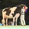 SwissExpo2017_Holstein_L32A1059
