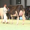 SwissExpo2017_Holstein_IMG_9692