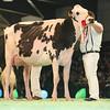 SwissExpo2017_Holstein_L32A1179