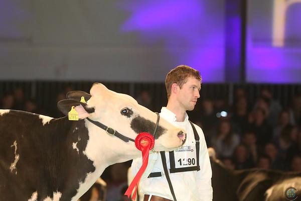 SwissExpo2017_Holstein_IMG_9597