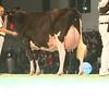 SwissExpo2017_Holstein_KIMG_0061
