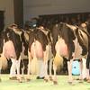 SwissExpo2017_Holstein_IMG_9713
