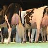 SwissExpo2017_Holstein_L32A1128