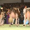 SwissExpo2017_Holstein_IMG_9874
