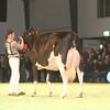SwissExpo2017_Holstein_IMG_9762