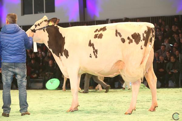 SwissExpo2017_Holstein_IMG_9689